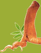 tongkat ali svorio metimui veiksmingi svorio metimo gėrimai