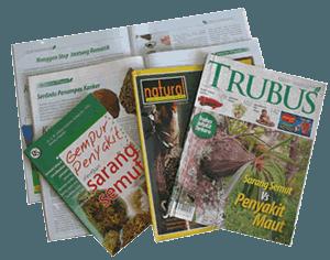 Artikel Sarang Semut