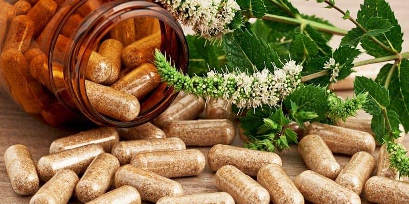 Sarang Semut: alternatif pengobatan tradisional obat kanker darah