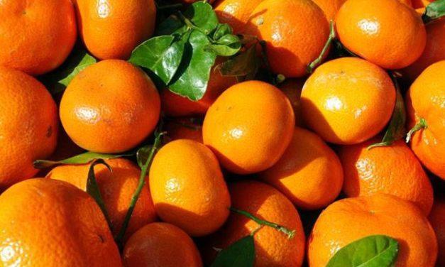 Urgensi dan Penyebab Turunnya Vitamin C Dalam Tubuh