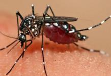Obat Demam Dengue
