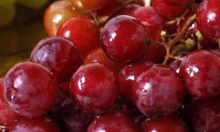 Penyakit Stroke Ternyata Bisa Dicegah dengan Biji Anggur