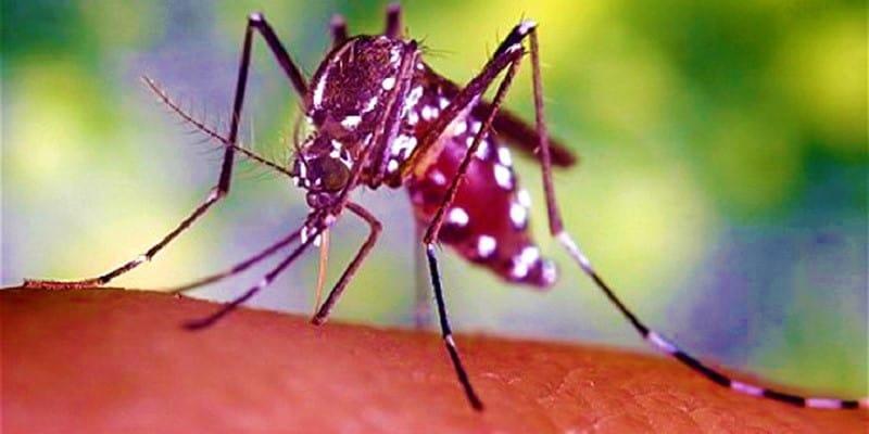 Pengobatan Malaria