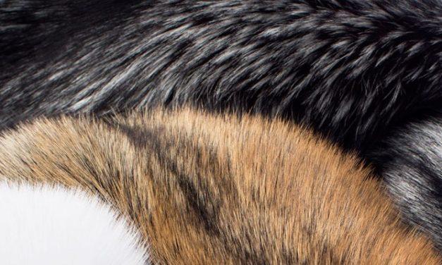 Alergi Bulu Binatang: Pencegahannya