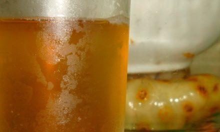 Bagaimana Cara Noni Juice Membantu Enzim Tubuh Dalam Mempertahankan Kehidupan?