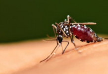 penyebab demam dengue
