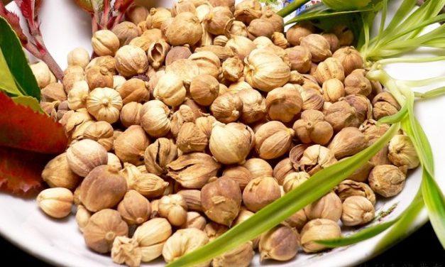 Buah Kapulaga sebagai Tanaman Herbal