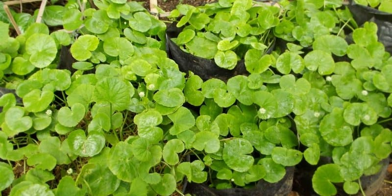 keboen-herba.blogspot.com