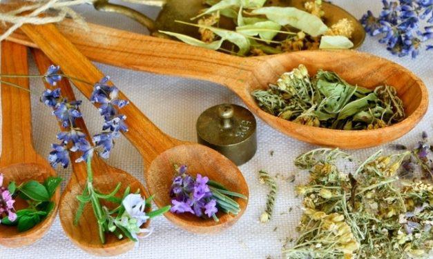 Herbal untuk Obat Malaria