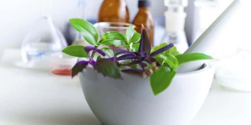 Apa Obat Herbal Difteri Terbaik?