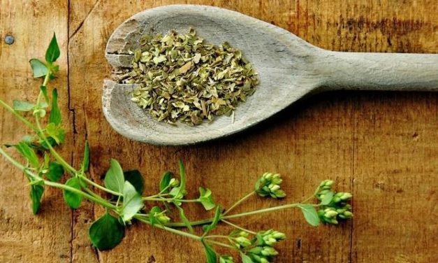 3 Herbal Asli Indonesia yang Sanggup Perpanjang Usia Anda!