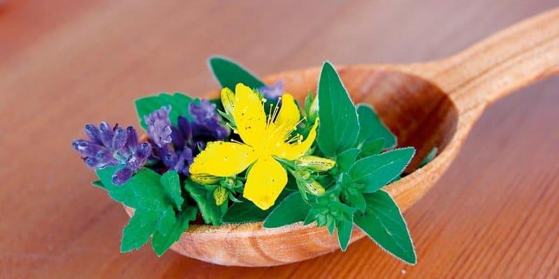 Apa Obat Herbal Kanker Ovarium Terbaik?