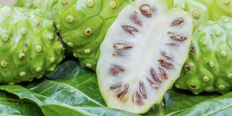 Apa Obat Herbal Periodontitis Terbaik?