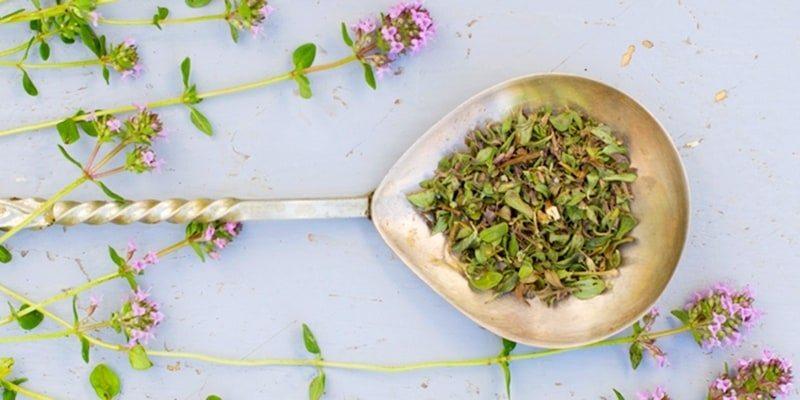 Apa Obat Herbal Listeriosis Terbaik?