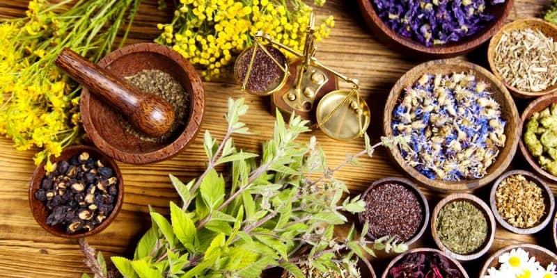 Hasil gambar untuk obat herbal