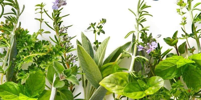Apa Obat Herbal Bursitis Terbaik?