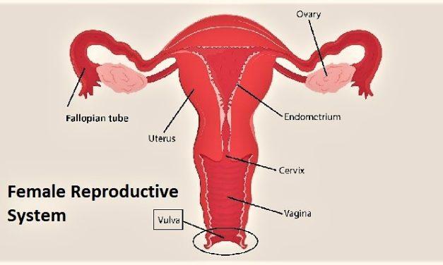 Kanker Vulva