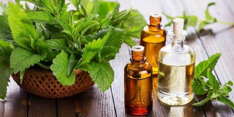 Apa Obat Herbal Hipertensi Terbaik?