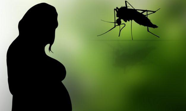 Apa Itu Virus Zika?