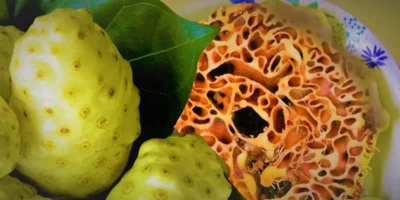 Kombinasi Herbal Asam Urat Sarang Semut dan Noni Juice