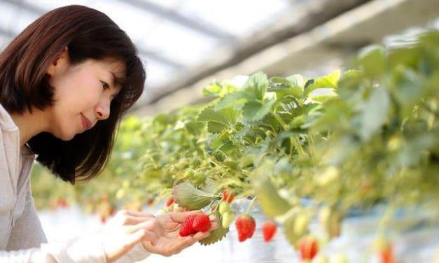 Herbal Untuk Meredakan Gejala Hot Flashes selama Menopause