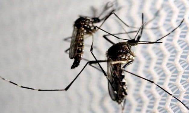 Simak 15 Fakta Penting seputar Virus Zika Berikut Ini!