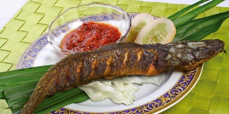Kontroversi Bahaya Dan Manfaat Ikan Lele Deherba Com