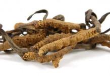 Efek Samping Cordyceps