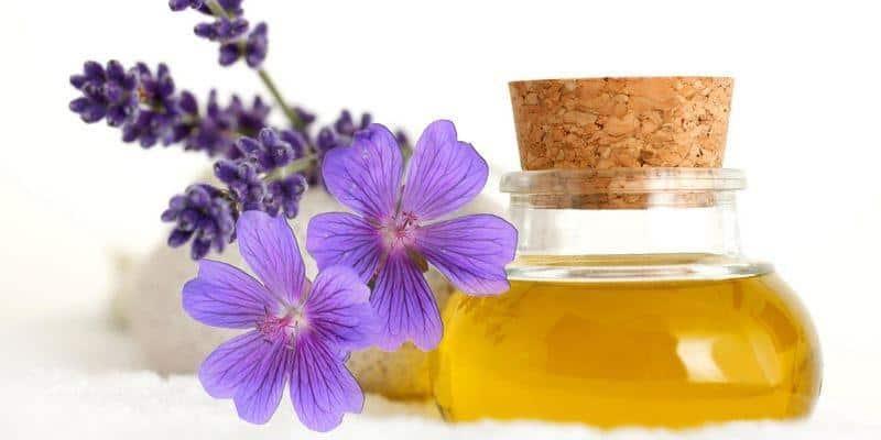 Image result for Khasiat Minyak Bunga Geranium Bagi Kesehatan