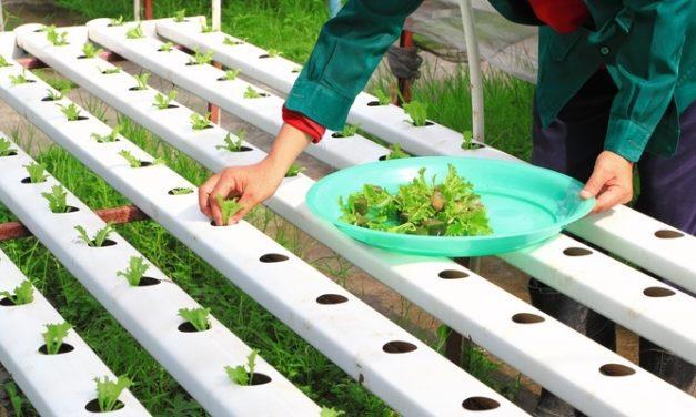 Benarkah Sayuran Hidroponik Lebih Sehat?