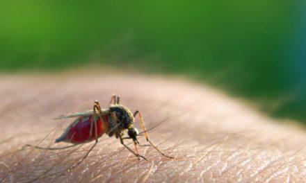 Cepat Tanggap Jika Muncul 6 Gejala Malaria Ini!