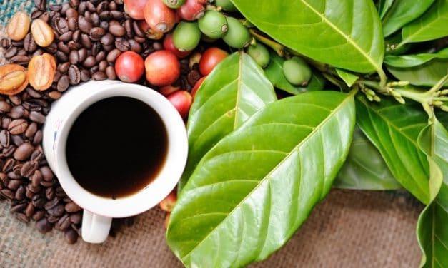 Bagi Peminum Kopi, Perhatikanlah 5 Cara Sehat Konsumsi Kafein Ini!