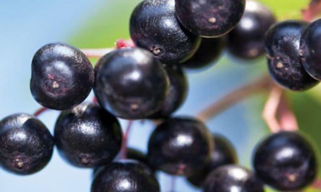Makanan Rendah Mineral: Diet untuk Penyakit Ginjal