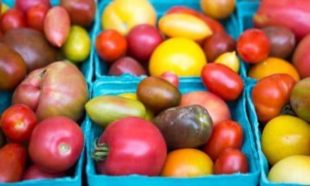 Makanan untuk Kulit, Karena Cantik Berawal dari Mulut Kita