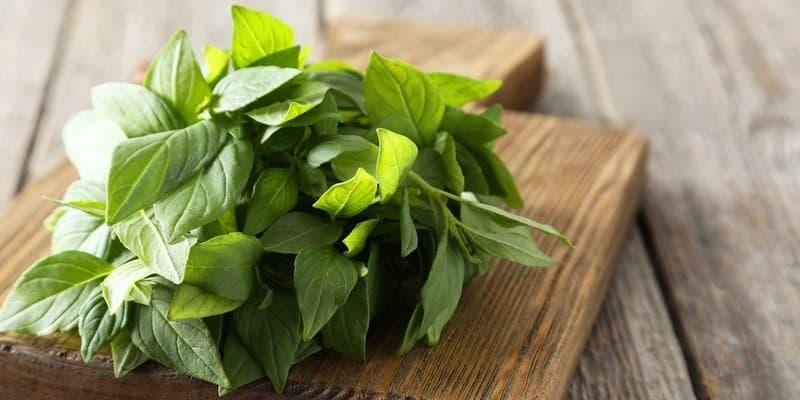 daun kemangi - manfaat kemangi - manfaat daun kemangi untuk kesehatan
