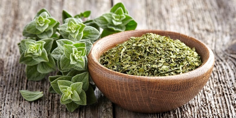 jenis herbal pencegah kanker - makanan anti kanker - pencegahan kanker