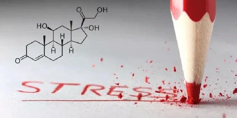 kortisol - hormon stress - cara menurunkan hormon