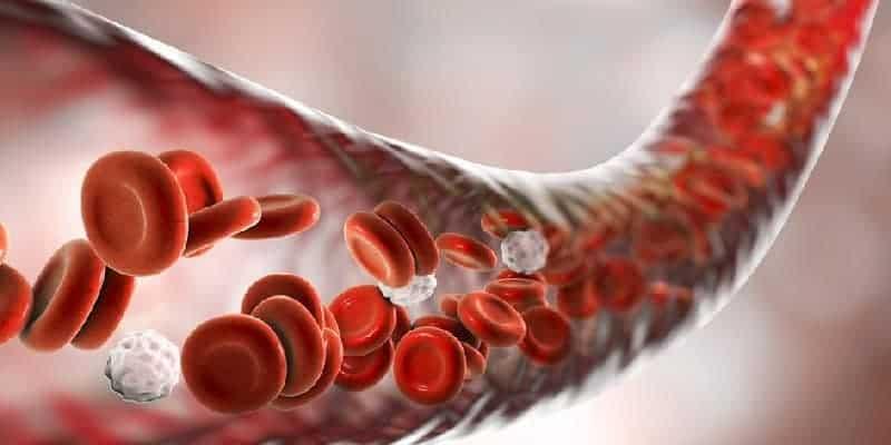 sel darah dalam tubuh