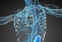 sistem limfatik untuk imunitas dan cegah kanker