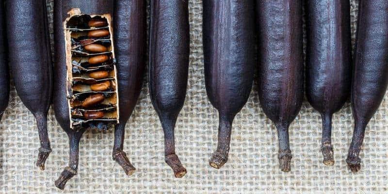 asam trengguli untuk resep herbal sariawan