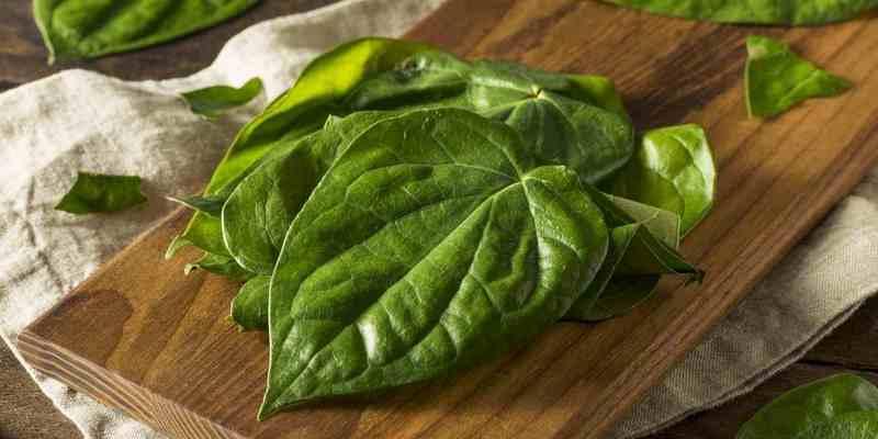 daun sirih untuk ramuan herbal mata merah