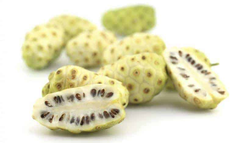 noni juice alternatif resep herbal disentri