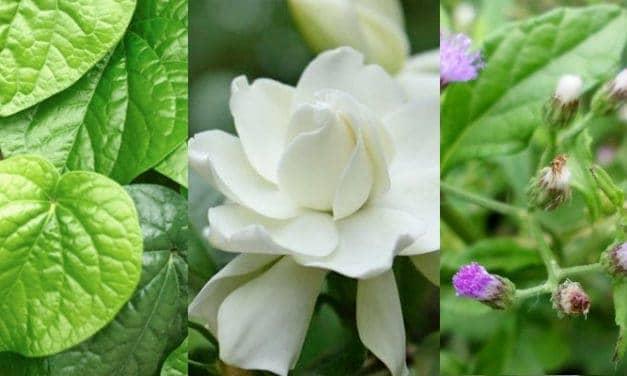 Racik Obat Batuk Alami dengan 3 Resep Herbal Gampang Ini