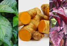resep herbal batu empedu