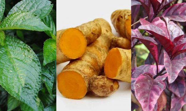 Resep Herbal untuk Hancurkan Batu Empedu Tanpa Operasi
