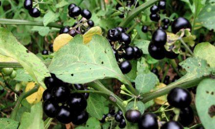 Singkirkan Gatal dengan Bantuan Resep Herbal Pilihan