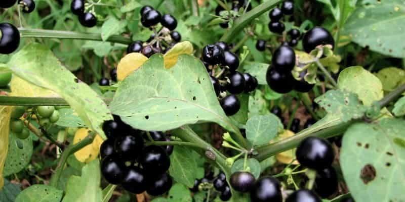 Resep herbal gatal