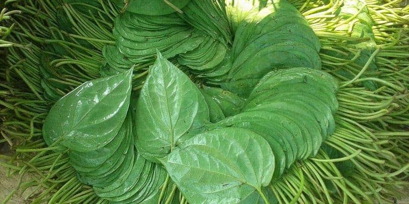 Resep herbal untuk gusi bengkak dan gusi berdarah