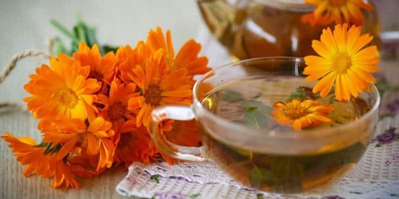 bunga tahi kotok untuk ramuan herbal mata gatal