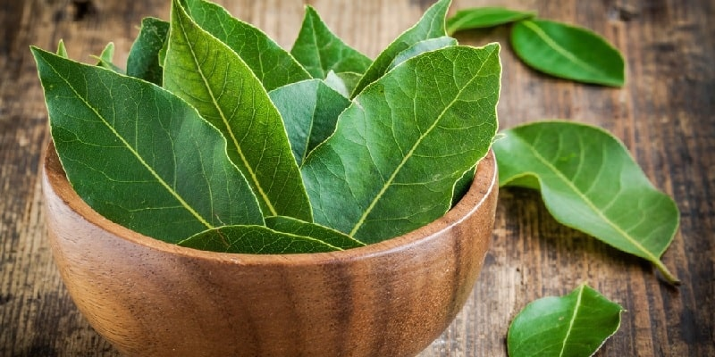 daun salam untuk resep herbal maag